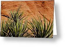 Yucca Family Greeting Card