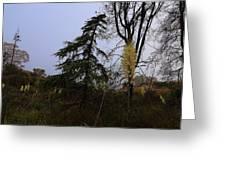 Yucca Filamentosa Rainy Day In Malibu Greeting Card