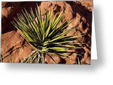 Yucca Five Greeting Card