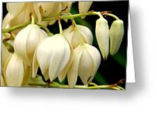 Yucca Flower Greeting Card