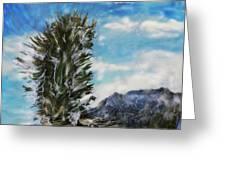 Yucca Glow  Greeting Card