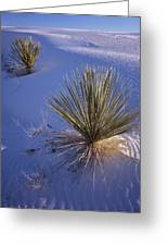 Yucca In Gypsum Sand Greeting Card