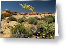 Yucca In The Valley Of Fire Greeting Card