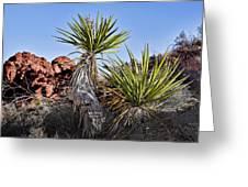 Yucca Pair Greeting Card