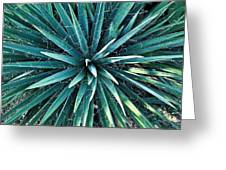 Yucca Plant Detail Greeting Card