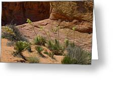 Yucca Plants Valley Of Fire Greeting Card