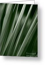 Yucca Spikes Greeting Card