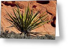 Yucca Two Greeting Card
