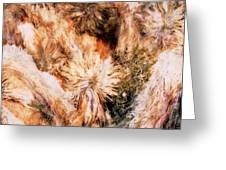 Yucca Warm Patch Greeting Card