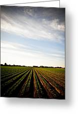 Yuma Fields  Greeting Card
