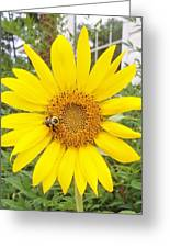 Yummy Sunflower Greeting Card