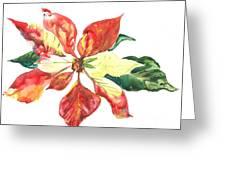 Yupo Poinsettia Greeting Card
