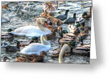 Yury Bashkin Ducks Stockholm  Greeting Card