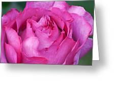 Yves Piaget Rose Greeting Card