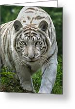 Zabu Greeting Card by Big Cat Rescue