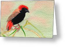 Zanzibar Red Bishop Greeting Card