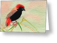 Zanzibar Red Bishop Greeting Card