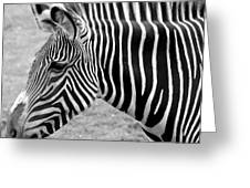 Zebra - Here It Is In Black And White Greeting Card