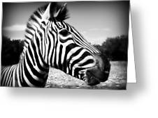 Zebra 2 Greeting Card