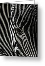 Zebra 3 Greeting Card