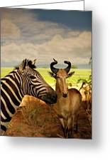 Zebra And Antelope Greeting Card
