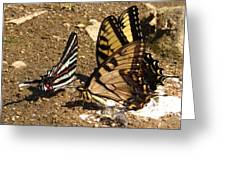 Zebra And Tigers Greeting Card
