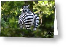 Zebra Curves And Stripes Greeting Card