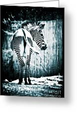 Zebra Blues  Greeting Card