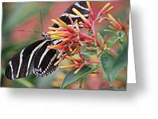 Zebra Butterfly With Blue Eyes Greeting Card