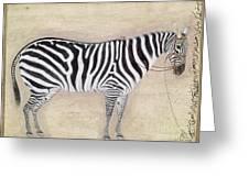 Zebra, C1620 Greeting Card