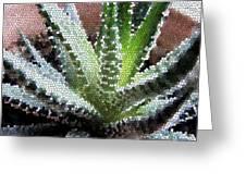 Zebra Cactus  Greeting Card