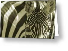 Zebra Close Up A Greeting Card