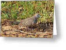 Zebra Dove Greeting Card