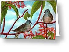 Zebra Doves Or Barred Dove Birds #309 Greeting Card