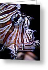 Zebra Fish Greeting Card