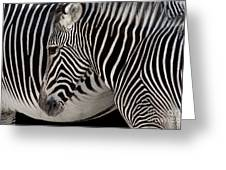 Zebra Head Greeting Card by Carlos Caetano
