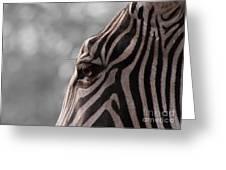 Zebra I Greeting Card