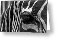 Zebra In Black And White Greeting Card