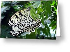 Zebra In Disguise Greeting Card