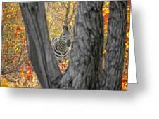 Zebra In Mopane Textures Greeting Card