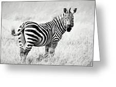 Zebra In The African Savanna Greeting Card