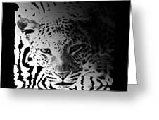 Zebra Kill Greeting Card