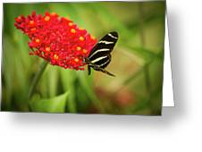 Zebra Long Wing Butterfly Greeting Card