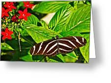 Zebra Longwing Butterfly In Living Desert Zoo And Gardens In Palm Desert-california  Greeting Card