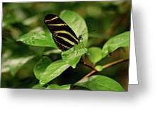 Zebra Longwing Butterfly Greeting Card