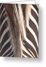 Zebra Mane Greeting Card