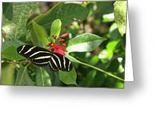 Zebra On The Wing Greeting Card