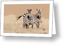 Zebra Pair Greeting Card