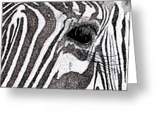 Zebra Portrait Greeting Card by Karl Addison