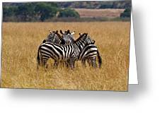 Zebra Protect Each Other Greeting Card